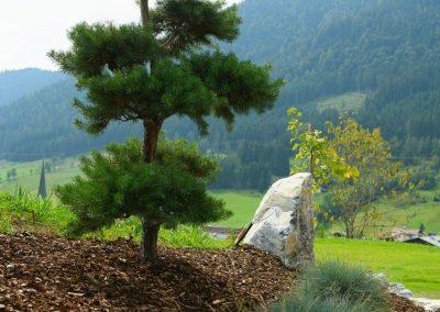 Alpiner Bonsai